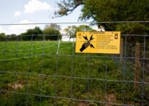 All You Need to Know About Electric Fences